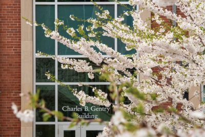 Trees in bloom outside of the Gentry Building.